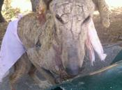 Desesperadamente ayuda urgente para galgo encontrado pésimas condiciones!!!