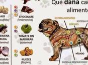 Alimentos prohibidos para perros #Infografía #Alimentación #Mascotas