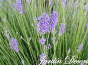 Flores Color Azul Lavanda