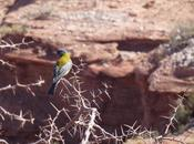 Aves naturaleza protegidas provincia Salta