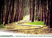 RELÁAAAAJATE... Siempre camino medio bosque