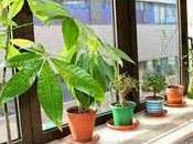 Beneficios plantas para salud