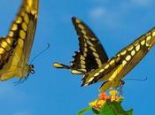 Teoría Caos, Efecto Mariposa concepto concebido