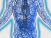 Cuerpos Energéticos hombre Cuerpo Etérico