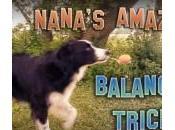 VIDEO: ¿Conoces Nana, Border Collie malabarista? ¡Tienes esto!