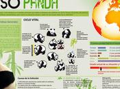 Panda #Infografía #Ambiental #Animales