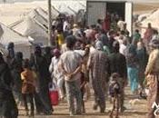 Miles personas huyen violencia Irak