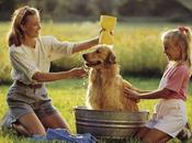 Cómo bañar perro casa