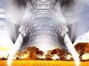 Larajedon misterio elefantes)- Sergio Medialdea