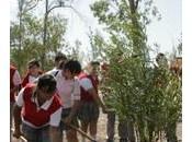 Plantan Árbol Bicentenario Tijuana