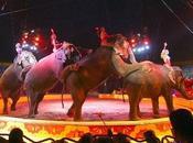 México. Animales fuera circos