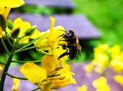 Salvemos abejas