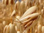 Convertir residuos cereales aditivos
