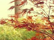 Jardín diseño para ático estilo japonés amante paisajismo