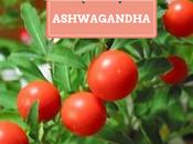 Ashwagandha Ginseng indio