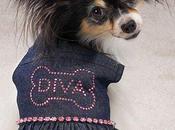 """viene primer concurso """"Miss Diva Can"""""""