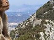 monos Gibraltar empresarios fumadores pertinaces