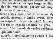 cerdos mejor criados Toledo 1883