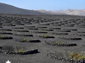 Lanzarote: vinos entre volcanes