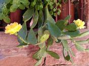 Grandes historias cosas pequeñas-3: Flor cactus