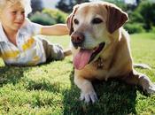 Enseñar niños cómo actuar perros