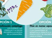 Asociaciones cultivo: Zanahoria