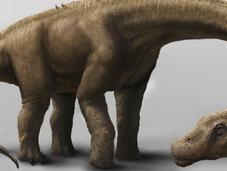 Descubren Argentina especímenes dinosaurio grande Tierra