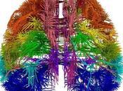 Neuromanagement: Nuestros Tres Cerebros, Estanislao Blachrach