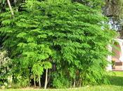 magnificas propiedades árbol Moringa
