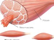 Tratamiento básico contracturas musculares