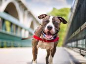 Cómo entender lenguaje corporal perro