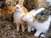 isla conejos japón