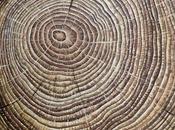 Casi años anillos árboles muestran hábitat oceánico alterado