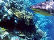 tiburones también afecta cambio climático