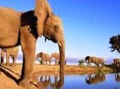 Marcha multinacional fauna africana ECO-SITIO, portal noticias ambientales ecología)