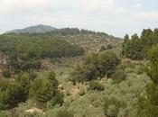 Parque Natural Sierra Tramuntana Mallorca