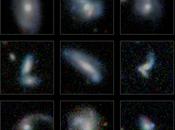 Buscando galaxias interacción sondeo GAMA