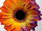 Abejas flores. Universo Eléctrico omnipresente