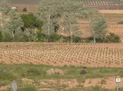 nueva agricultura será limpia