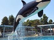 Orcas cautivas hablan como delfines