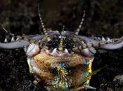 Increíbles criaturas océano parecen ciencia ficción
