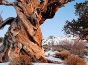 organismos vivos antiguos Tierra