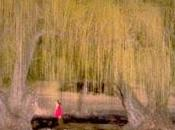 Sauce ciego, mujer dormida, Haruki Murakami