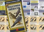 DISPONIBLE: Halcones ibéricos