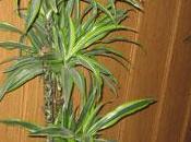 Plantas descontaminantes para hogar