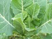 Funciones elementos nutritivos plantas