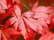 nuevo otoño