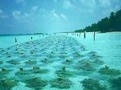 Granjas algas marinas