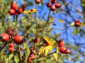 Propuesta: lugares visitar otoño. mano Dacia