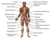 cuerpo imagen